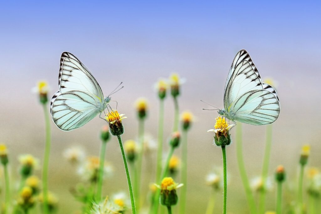 Peace Stillness Presence